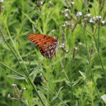 Butterfly Side