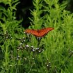 Butterfly resize